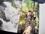 サミットでも脚光を浴びた炭酸水の画像(3枚目)