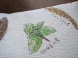 「   モニプラ報告:『無敵の切麦』オホーツク生ひやむぎ(津村製麺所) 【日本の麦の底力】 」の画像(7枚目)