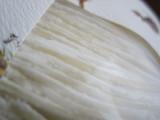 「   モニプラ報告:『無敵の切麦』オホーツク生ひやむぎ(津村製麺所) 【日本の麦の底力】 」の画像(10枚目)