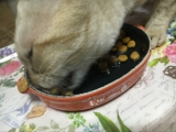 まるでオヤツを食べる時のような食いつき!銀のスプーン 三ツ星グルメパウチ 国産プレミアム♪の画像(9枚目)