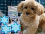 口コミ記事「新日本水素わんちゃん専用高濃度水素水ペットの贅沢水素水♪」の画像
