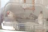 モニター記事:セキセイ&フィンチ用餌 の画像(5枚目)