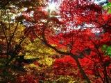 秋の神戸&有馬への画像(1枚目)