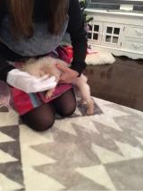 【モニター】ペット用品「ウェット手袋なでなで」 の画像(3枚目)