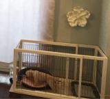 【モニター】ペット用品の洗剤・仕上げ剤の画像(1枚目)