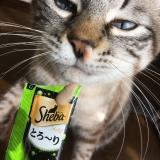 猫との暮らし: シーバとろ〜りメルティのレビューの画像(7枚目)
