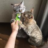 猫との暮らし: シーバとろ〜りメルティのレビューの画像(9枚目)