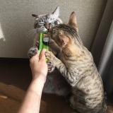 猫との暮らし: シーバとろ〜りメルティのレビューの画像(10枚目)
