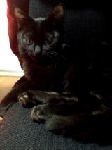 我が家のネコちゃんお気に入り♡『シーバ とろ~り メルティ』の画像(1枚目)