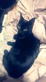 我が家のネコちゃんお気に入り♡『シーバ とろ~り メルティ』の画像(2枚目)