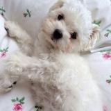 「愛犬のしつけ、1人で悩まないで♡ワンコも飼い主さんも一緒に成長できますよ」の画像(1枚目)