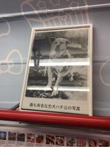 「   [Hello Kitty] 渋谷「青ガエル 観光案内所」が、ハローキティのラッピングに♪♪ 」の画像(5枚目)