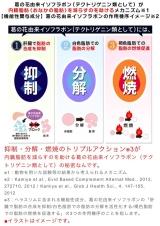 「内臓脂肪を減らすサプリメント☆ヘラスリム☆」の画像(5枚目)