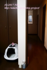 「   SCBiO(エスシィバイオ)で快適空間を作る! 」の画像(8枚目)