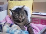 【ケーエーナチュラルフーズ】 犬猫用元気が出るサプリメント ペット用アガリクスをモニタープレゼント♪の画像(1枚目)