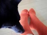 「おもちのようにあったか&やわらか靴下 「もちっくす」」の画像(5枚目)