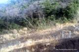 「椿まつりの伊豆大島に行ってきました!【大島椿×島ガールコラボ伊豆大島の旅】」の画像(9枚目)