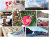 「椿まつりの伊豆大島に行ってきました!【大島椿×島ガールコラボ伊豆大島の旅】」の画像(1枚目)
