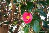 「椿まつりの伊豆大島に行ってきました!【大島椿×島ガールコラボ伊豆大島の旅】」の画像(5枚目)
