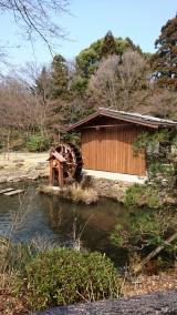 東山動物園の画像(8枚目)