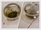 「緊張を解しリラックス 美味しいお茶は源宗園・茜富士」の画像(12枚目)