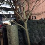 「新しい桜が!!」の画像(2枚目)