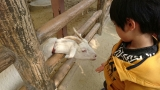 東山動物園の画像(5枚目)