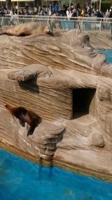 東山動物園の画像(3枚目)