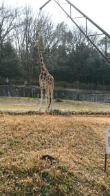 東山動物園の画像(2枚目)