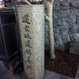 「新しい桜が!!」の画像(1枚目)