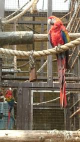 東山動物園の画像(6枚目)