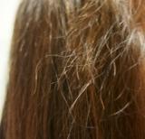 SNSで話題の生ハチミツシャンプーで、うるツヤ春髪に!ハニープラス♪の画像(7枚目)