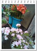 園芸用の土って | 田舎暮らしジジのコスメ日記 - 楽天ブログの画像(5枚目)