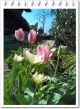 園芸用の土って | 田舎暮らしジジのコスメ日記 - 楽天ブログの画像(1枚目)