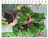 園芸用の土って | 田舎暮らしジジのコスメ日記 - 楽天ブログの画像(3枚目)
