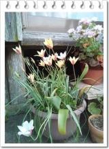 園芸用の土って | 田舎暮らしジジのコスメ日記 - 楽天ブログの画像(2枚目)