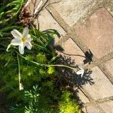「春の芽吹き」の画像(1枚目)