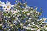 「庭の様子」の画像(2枚目)