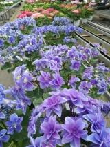 「植物を育てるのに一番大事なのは土『サカタのスーパーミックスA』」の巻の画像(1枚目)