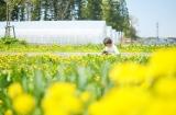 (カメラ必須!!)息子と菜の花畑へ行ってきました。&私のピンボケ対策の画像(3枚目)