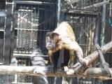 「生まれて初めての動物園」の画像(1枚目)
