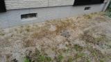 ネコソギエースV粒剤 350g  で、雑草対策  第二弾 ♪♪の画像(4枚目)