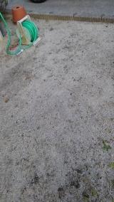 ネコソギエースV粒剤 350g  で、雑草対策  第二弾 ♪♪の画像(5枚目)