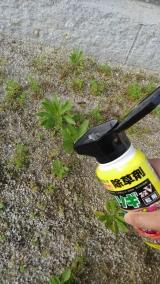 ネコソギエースV粒剤 350g  で、雑草対策  第二弾 ♪♪の画像(1枚目)