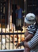 「生まれて初めての動物園」の画像(3枚目)
