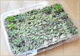 """植物の成長には土の質が大事!""""サカタのタネ オリジナル培養土スーパーミックスA""""の画像(11枚目)"""