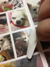 「お気に入りの写真をフォトグッズに♡seal stand」の画像(5枚目)