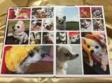 「お気に入りの写真をフォトグッズに♡seal stand」の画像(4枚目)