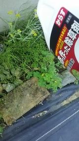 子供にも安心な食品成分の除草剤♪の画像(10枚目)