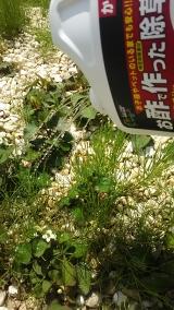 子供にも安心な食品成分の除草剤♪の画像(8枚目)